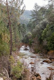 Krajobraz rzeki w lesie