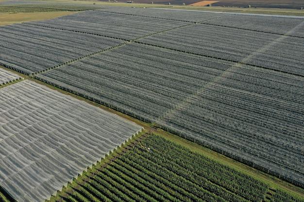 Krajobraz sadu jabłkowego