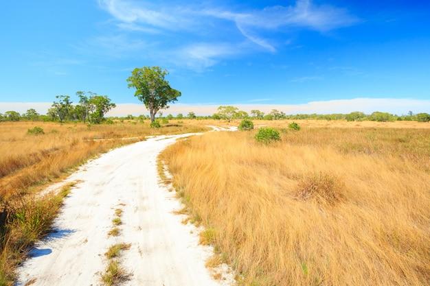 Krajobraz savannah