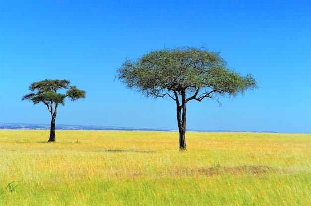 Krajobraz sawanny w parku narodowym kenii