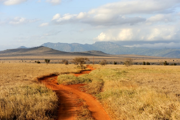 Krajobraz sawanny w parku narodowym w kenii, w afryce