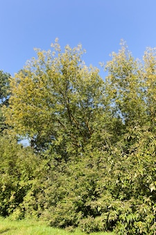 Krajobraz sezonu jesiennego
