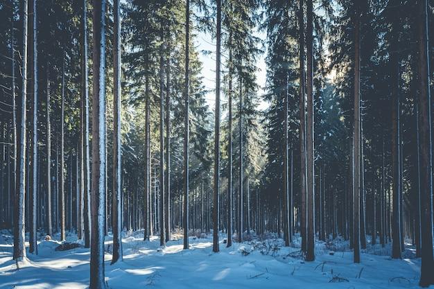 Krajobraz strzał tajemniczego lasu w śnieżny dzień