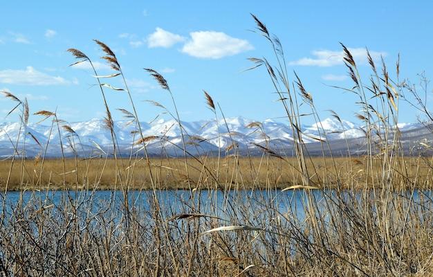 Krajobraz suchej trawy z jeziorem i zaśnieżonymi górami