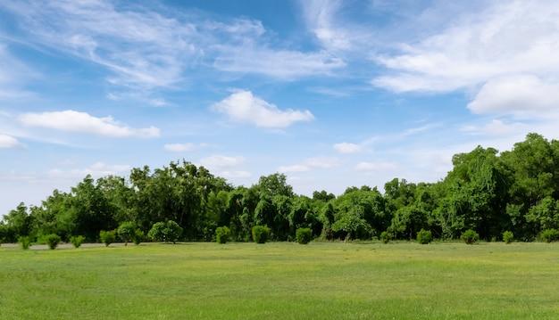 Krajobraz trawy pola i zieleni środowiska jawny park z niebieskim niebem.