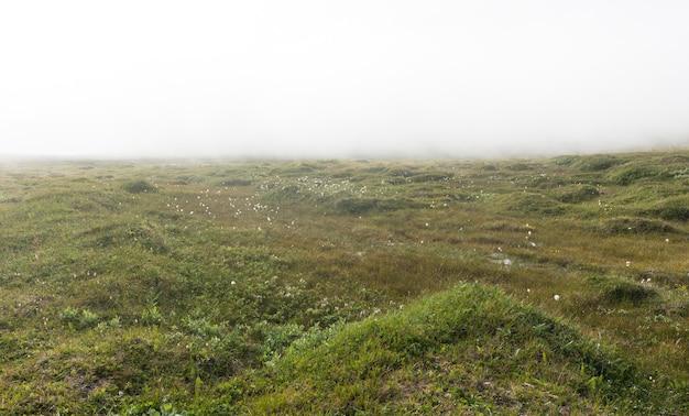 Krajobraz tundry we mgle, wyspa soroya, norwegia