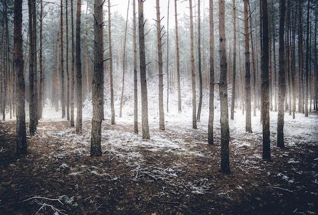 Krajobraz upiornego zimowego lasu pokrytego mgłą
