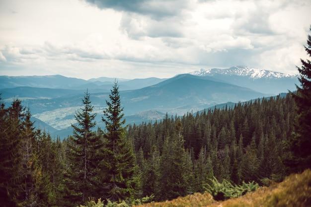 Krajobraz w górach karpatach ukrainy