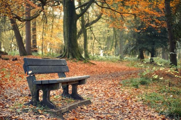 Krajobraz w jesień parku z ławką. polkemmet country park, west lothian, szkocja