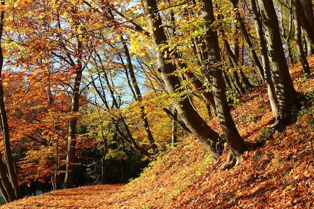 Krajobraz w jesiennym parku miejskim