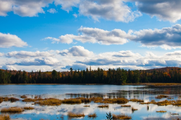 Krajobraz w jeziorze