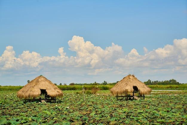 Krajobraz w kambodży