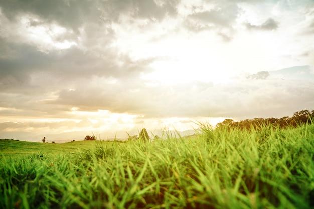 Krajobraz w kostaryce, sunset grass i człowiek.