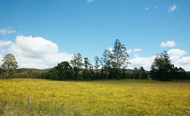 Krajobraz w piękny dzień