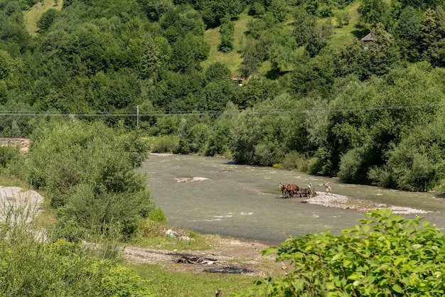 Krajobraz w vaser valley, bukowiny, pociąg parowy mocanita, rumunia