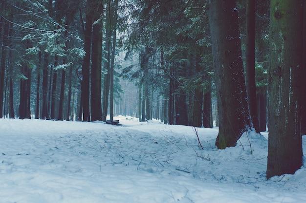 Krajobraz w zimnych odcieniach pokrytego śniegiem zimowego lasu.