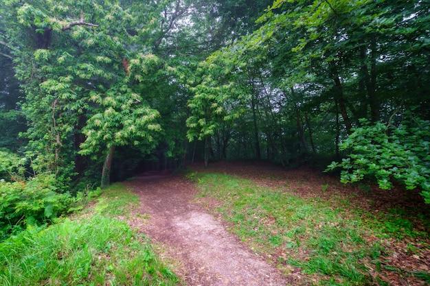 Krajobraz wejścia do ciemnego lasu pełnego roślinności w mglisty dzień