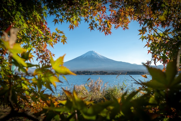 Krajobraz widok góry fuji i jaskrawy czerwony liść klonowy rama kawaguchiko
