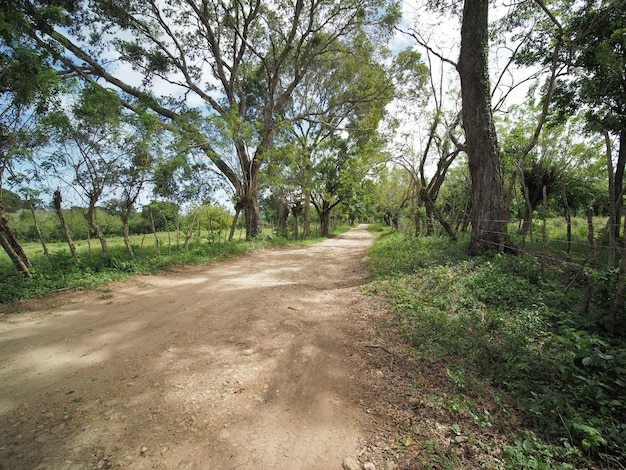 Krajobraz wiejski, pole uprawne i trawa z płotem na wiejskiej scenerii z wiejską drogą. republika dominikany.