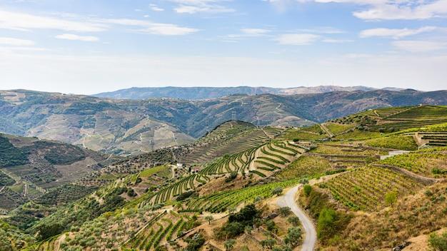 Krajobraz winnic w górach portugalii w okresie letnim