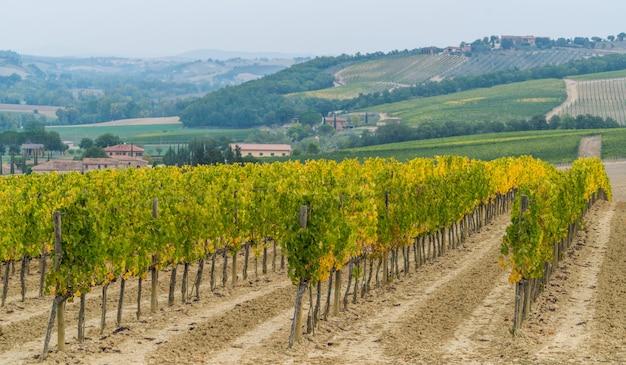 Krajobraz winnic w toskanii we włoszech.