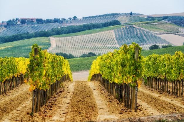 Krajobraz winnic w toskanii we włoszech