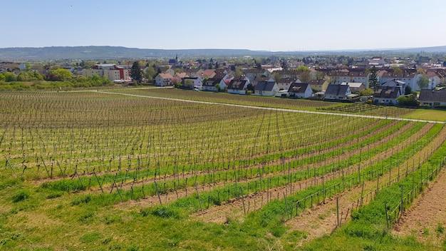 Krajobraz winnicy z wieloma drzewami winogronowymi i zielenią w pobliżu domów w słoneczny dzień. tło wiosna natura.
