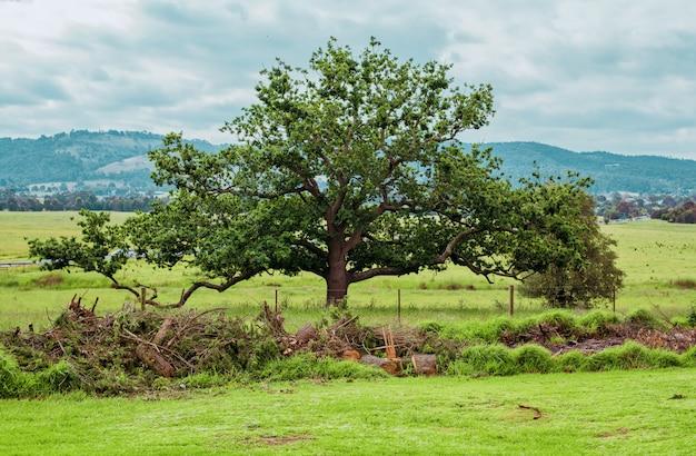 Krajobraz wsi: drzewo na ziemi trawy.