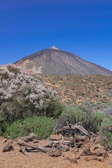 Krajobraz wulkanicznego parku narodowego teide, kwitnący spartocytisus supranubius, teneryfa, wyspy kanaryjskie, hiszpania