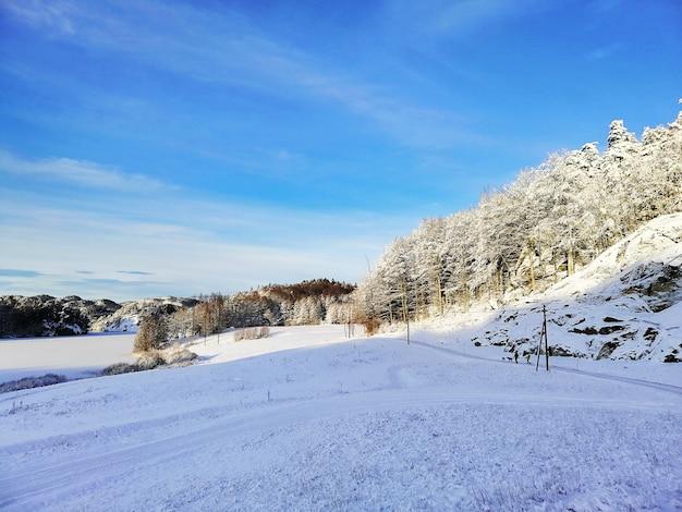Krajobraz wzgórz pokrytych drzewami i śniegiem w słońcu i błękitne niebo w larvik w norwegii