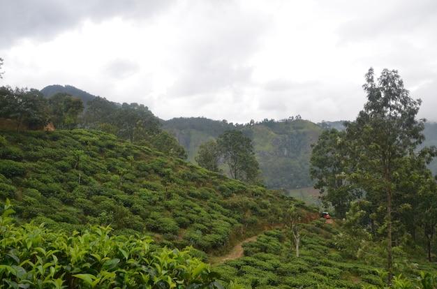 Krajobraz wzgórz pokrytych zielenią i mgłą pod zachmurzonym niebem
