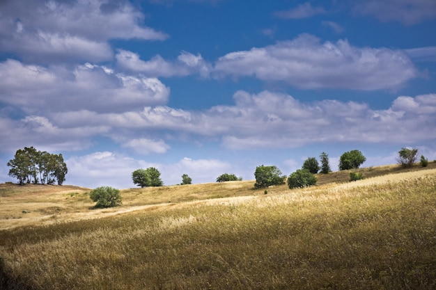 Krajobraz wzgórza z wysuszoną trawą i drzewami na tle zachmurzonego nieba i drzewami na tle zachmurzonego nieba