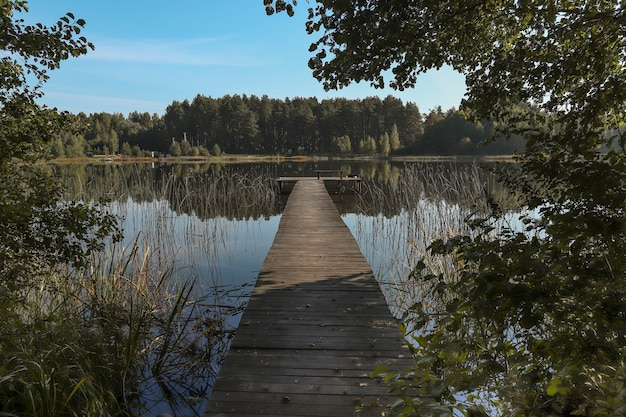 Krajobraz z drewnianym długim pomostem w perspektywicznym lesie nad jeziorem na horyzoncie i błękitnym niebem w lecie