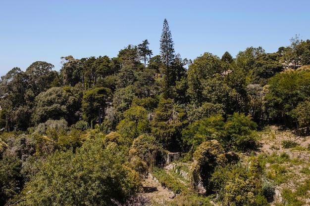 Krajobraz z drzewami i niebieskim niebem