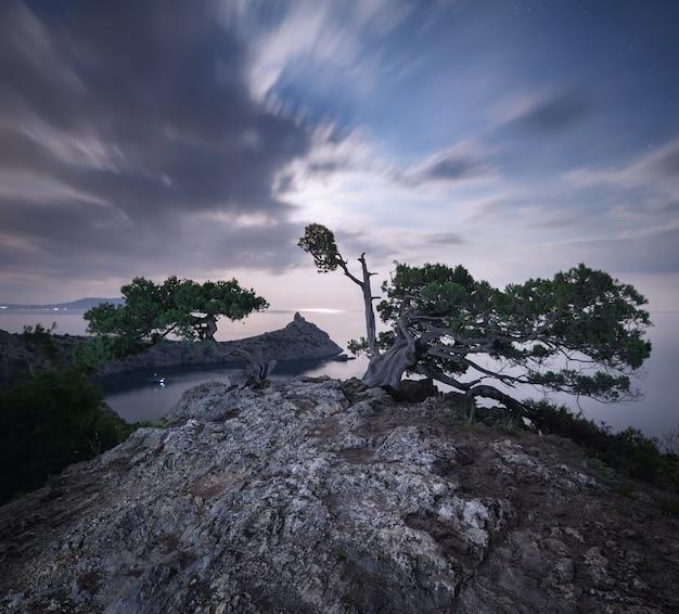 Krajobraz z drzewami obok wybrzeża