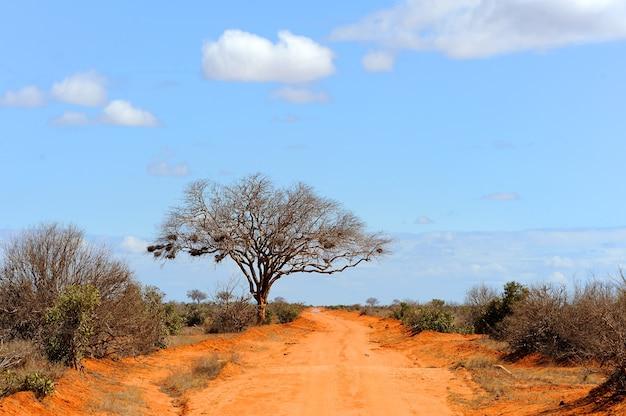 Krajobraz z drzewem w afryce