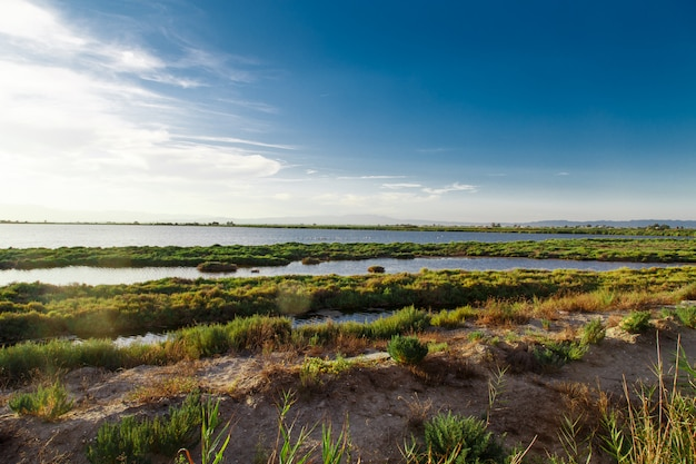 Krajobraz z flamingami