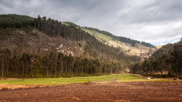 Krajobraz z górą i drzewami