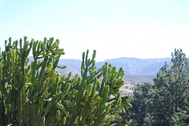 Krajobraz z kaktusem