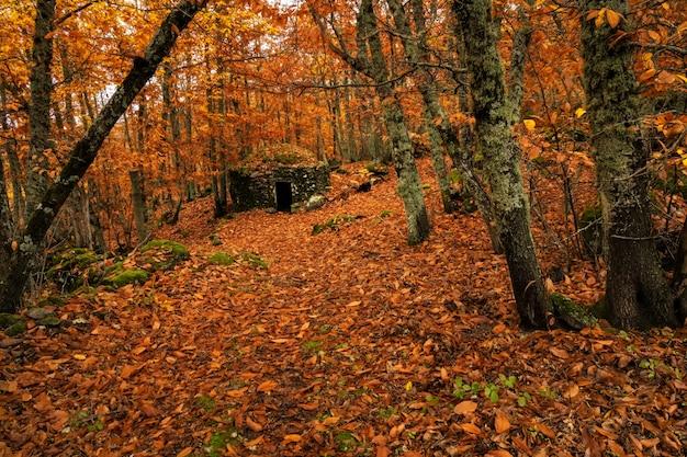 Krajobraz z kamienną chatą w kasztanowym lesie niedaleko montanchez. extremadura. hiszpania.
