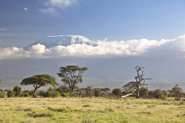 Krajobraz z kilimandżaro - dach afryki w tanzanii.