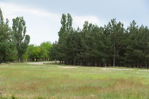 Krajobraz z lasem i drogą pejzaże ukraińskiej wsi