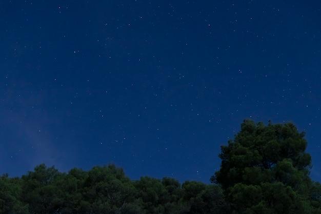 Krajobraz z lasem i nocnym niebem