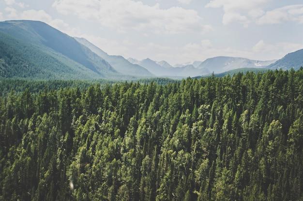 Krajobraz z leśnymi górami. ałtaj, syberia. wysoka jodła na zboczach gór ałtaju. surowy rosyjski krajobraz.