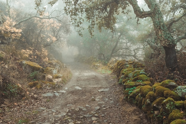 Krajobraz z mgłą na wiejskiej drodze. montanchez. hiszpania.