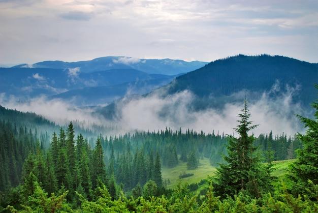 Krajobraz z mgłą w górach i rzędach drzew