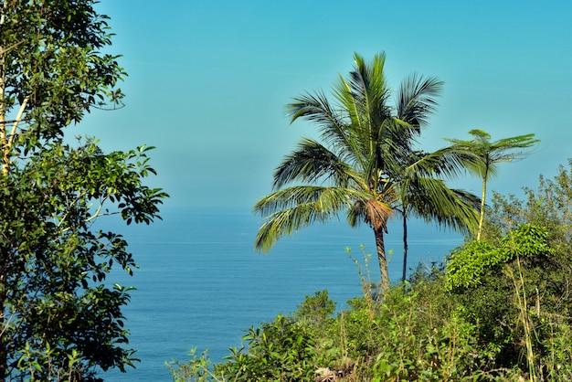 Krajobraz z morzem, z przodu roślinność. wybrzeże brazylii