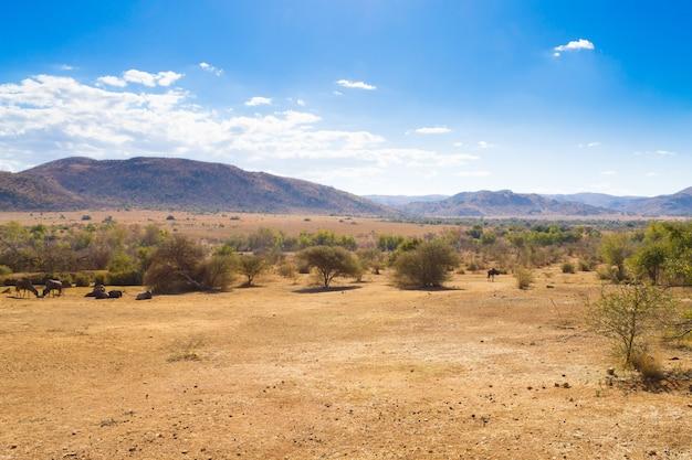 Krajobraz z parku narodowego pilanesberg w rpa. dzika przyroda i przyroda. afrykańskie safari