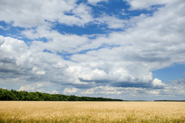 Krajobraz z polem pszenicy, drzew i chmur na niebieskim niebie.