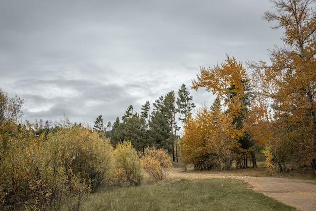 Krajobraz z pożółkłą łąką, iglastymi i złocistymi drzewami liściastymi oraz pochmurnym jesiennym niebem i leśną drogą
